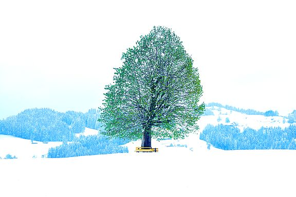 Wintertree.JPG